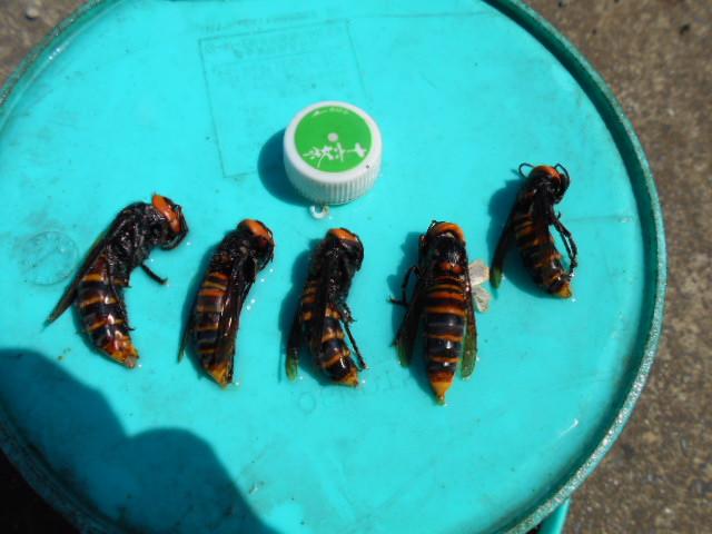 蜂 採り ジュース3